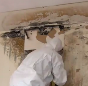Mold-Remediation-ServiceMaster-Fort-Wayne-IN
