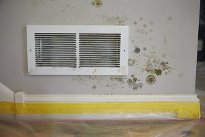 Mold remediation in Warsaw, IN