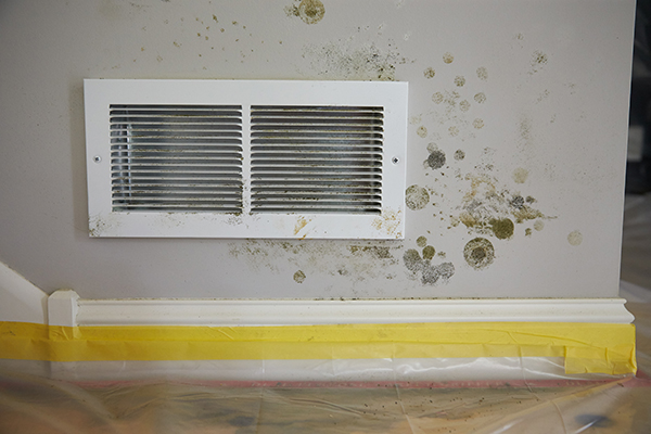 Inspect Your Home for Mold This Spring