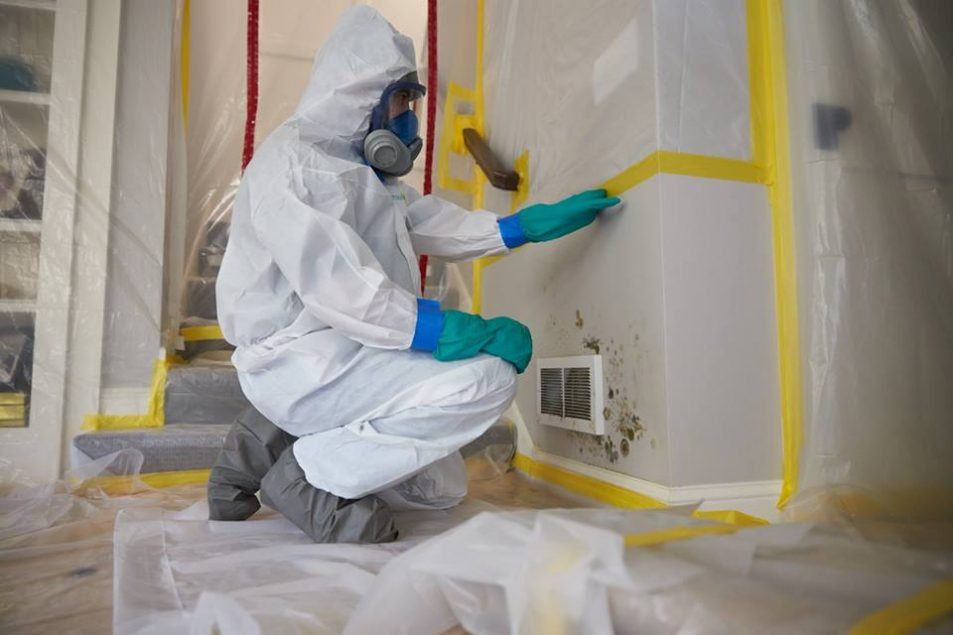 ServiceMaster-Fort-Wayne-Mold-Removal