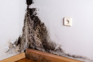 Mold Removal by ServiceMaster by RC