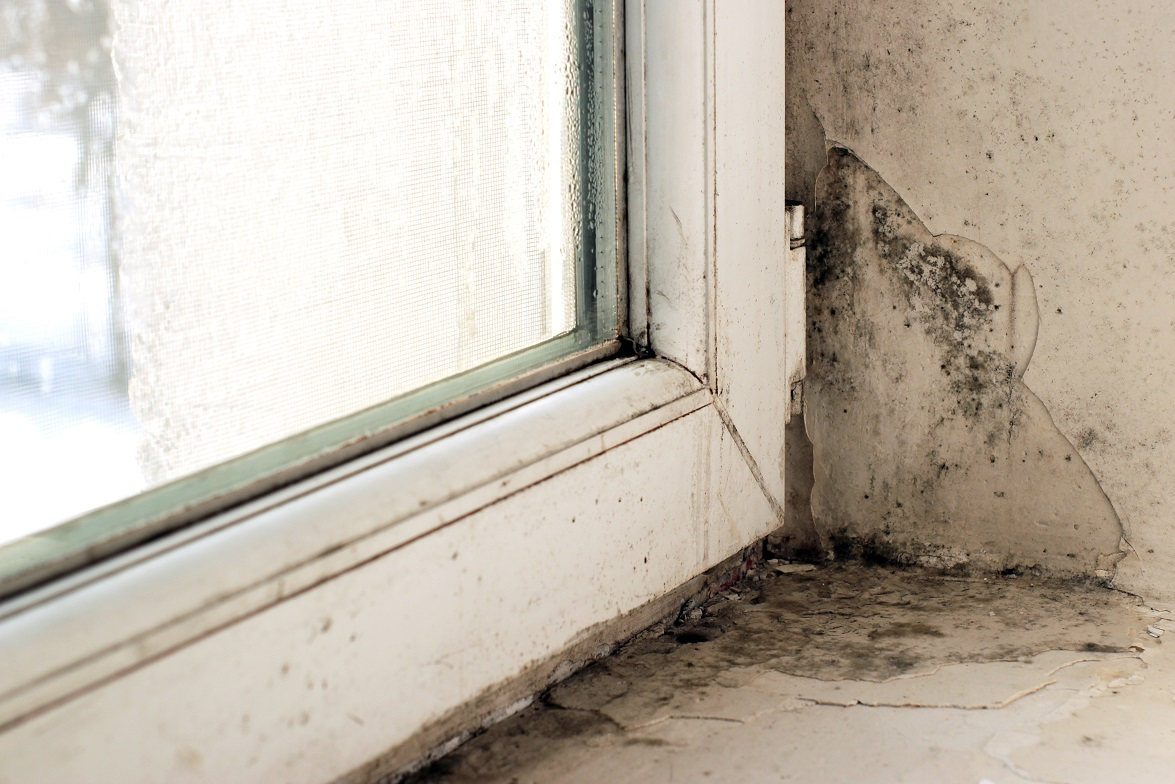 remove mold from windowsill fort wayne in