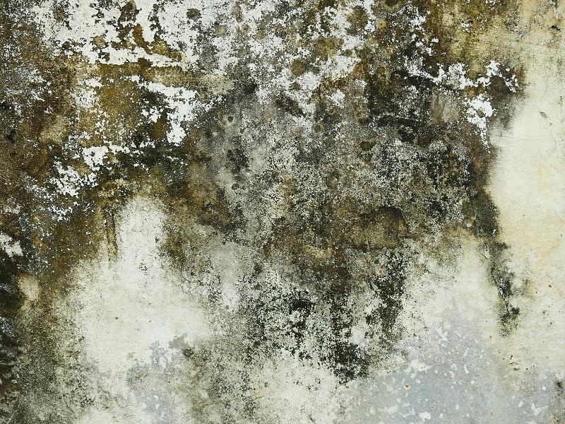 this mold is darker than mildew