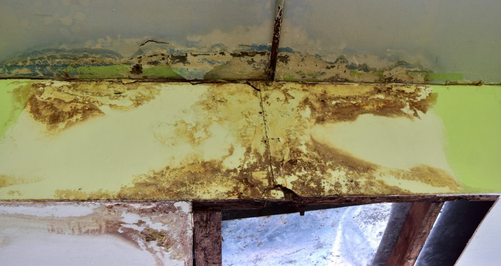 Mold in the crawlspace